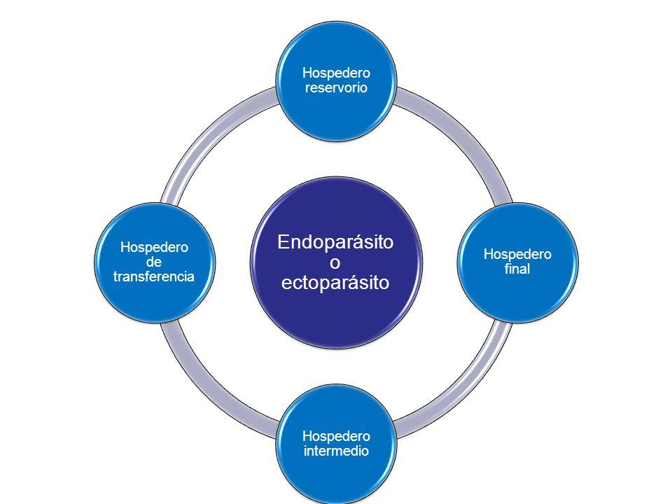Endoparásito o ectoparásito Hospedero reservorio Hospedero final