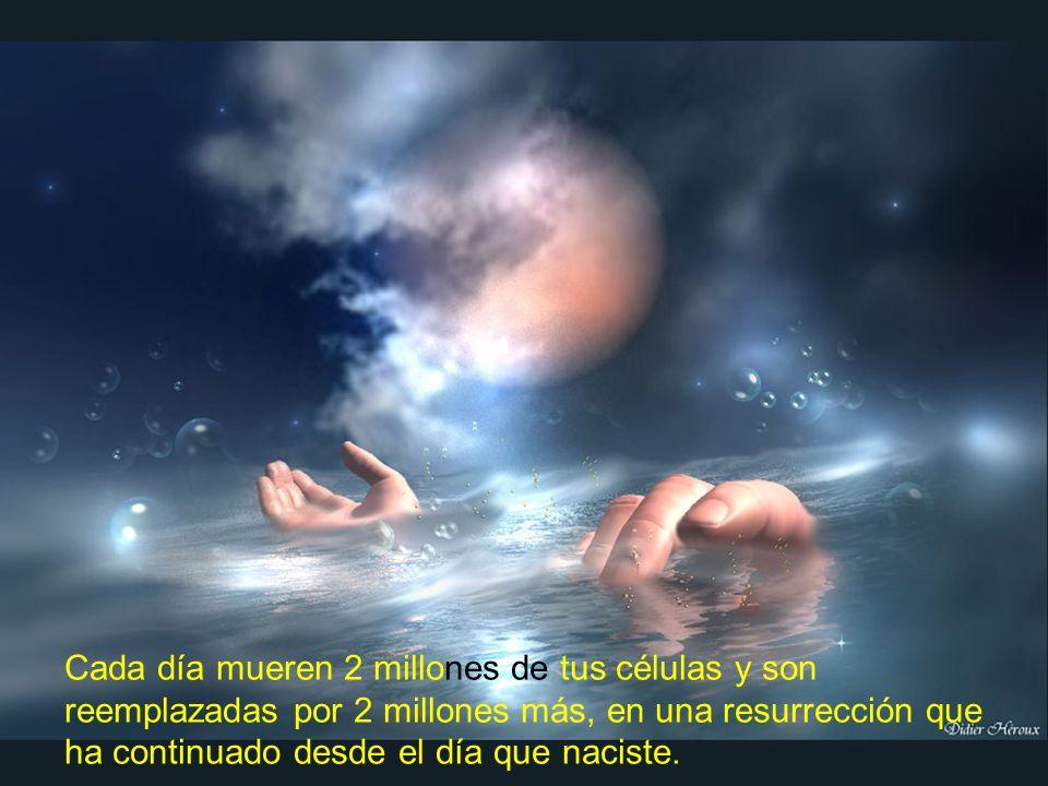 Cada día mueren 2 millones de tus células y son reemplazadas por 2 millones más, en una resurrección que ha continuado desde el día que naciste.
