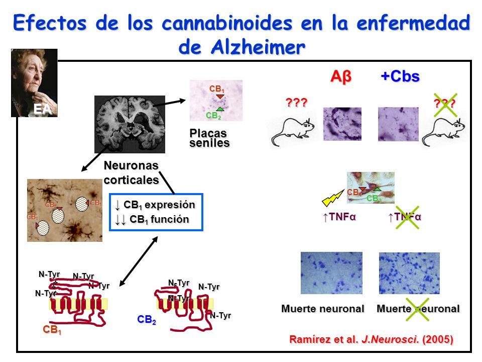 Efectos de los cannabinoides en la enfermedad de Alzheimer