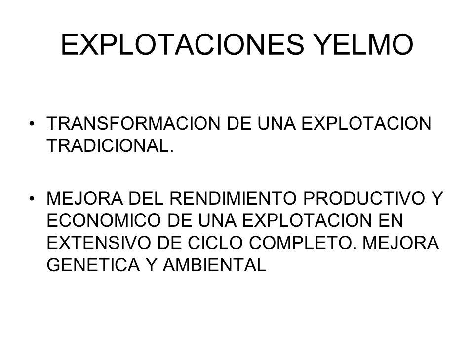 EXPLOTACIONES YELMO TRANSFORMACION DE UNA EXPLOTACION TRADICIONAL.