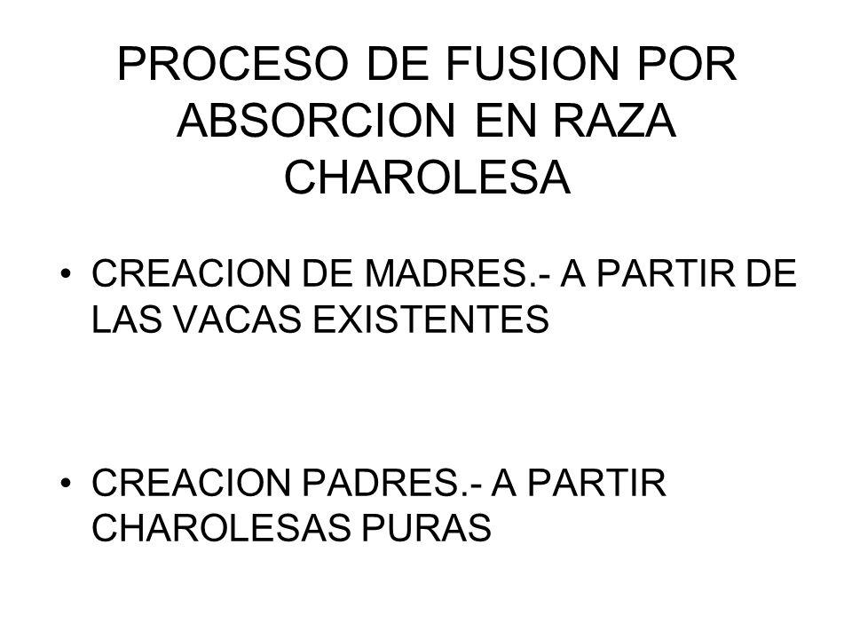 PROCESO DE FUSION POR ABSORCION EN RAZA CHAROLESA