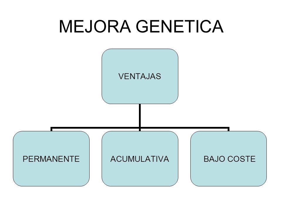 MEJORA GENETICA