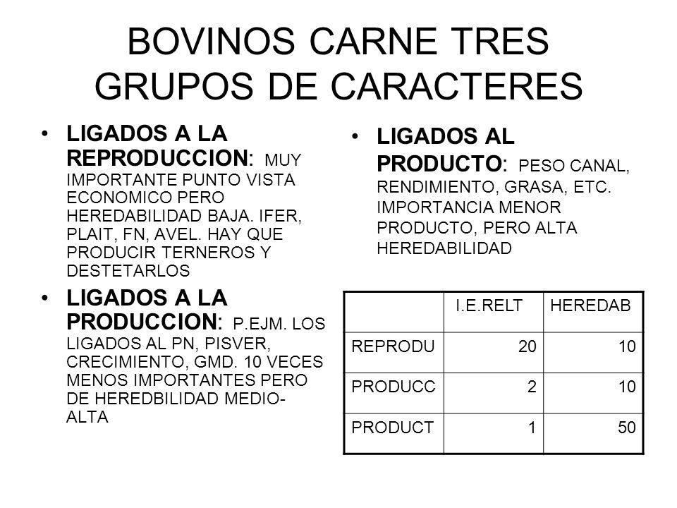 BOVINOS CARNE TRES GRUPOS DE CARACTERES