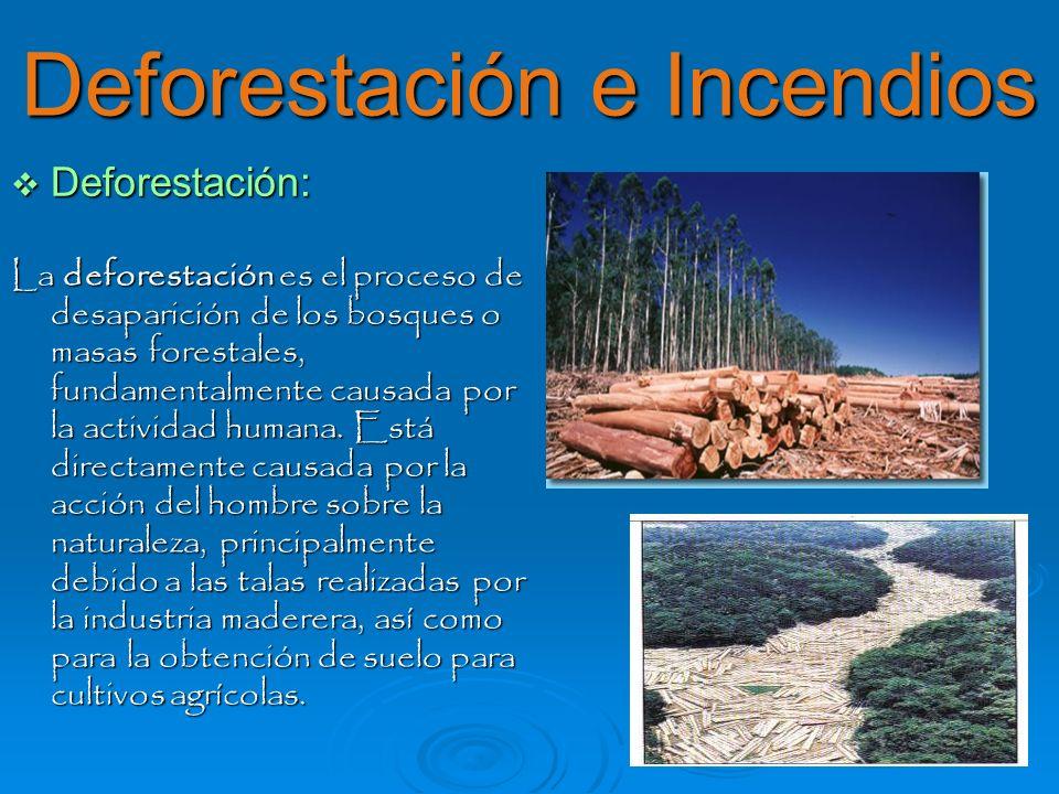 Deforestación e Incendios