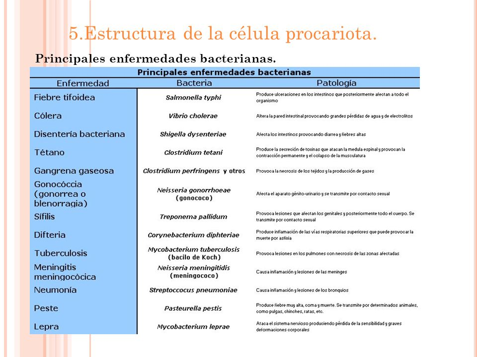 5.Estructura de la célula procariota.