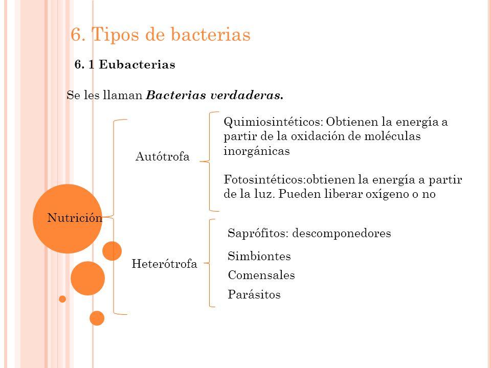6. Tipos de bacterias 6. 1 Eubacterias