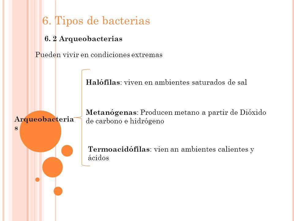 6. Tipos de bacterias 6. 2 Arqueobacterias