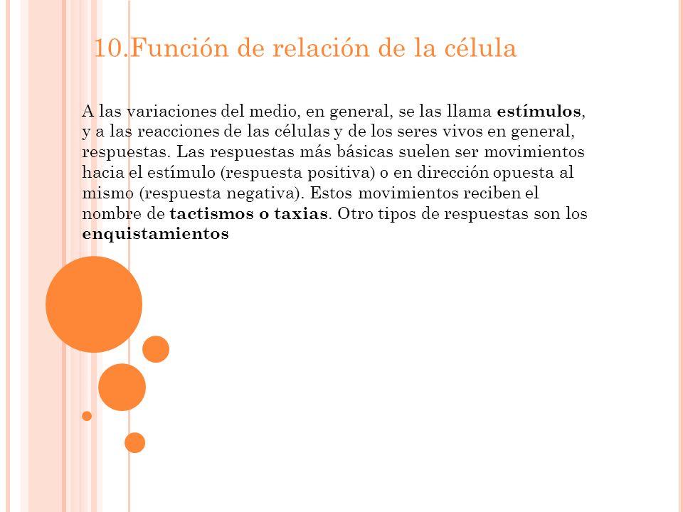 10.Función de relación de la célula