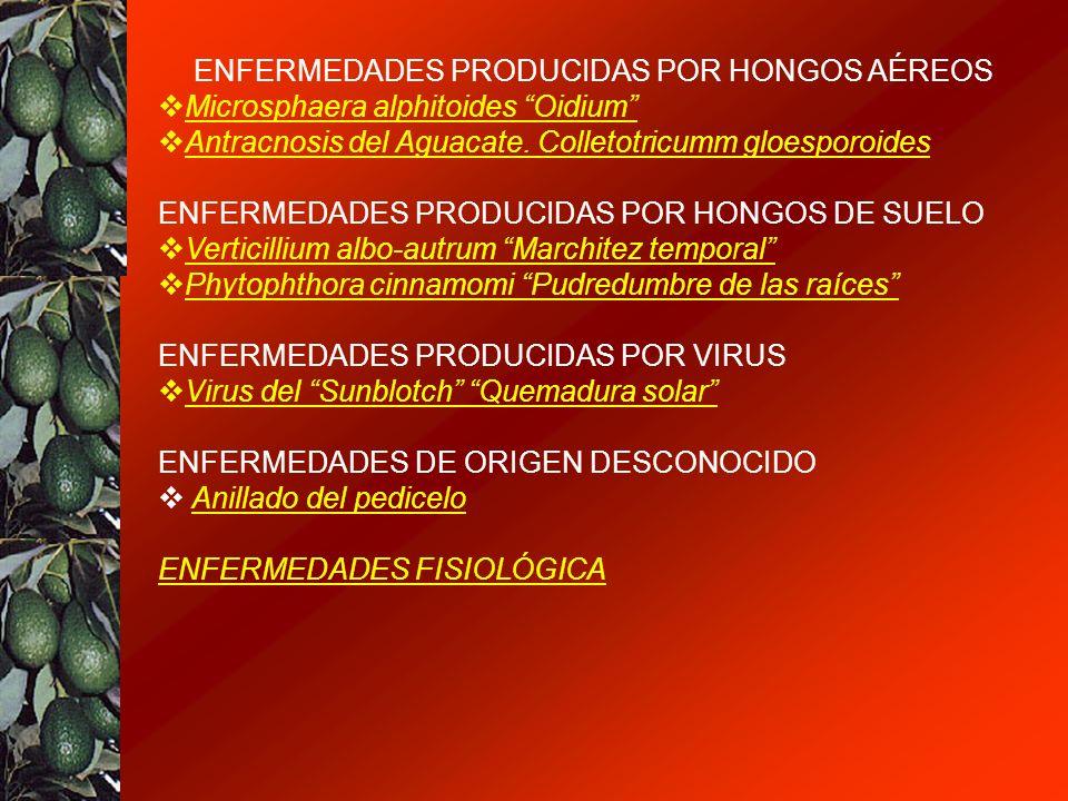 ENFERMEDADES PRODUCIDAS POR HONGOS AÉREOS