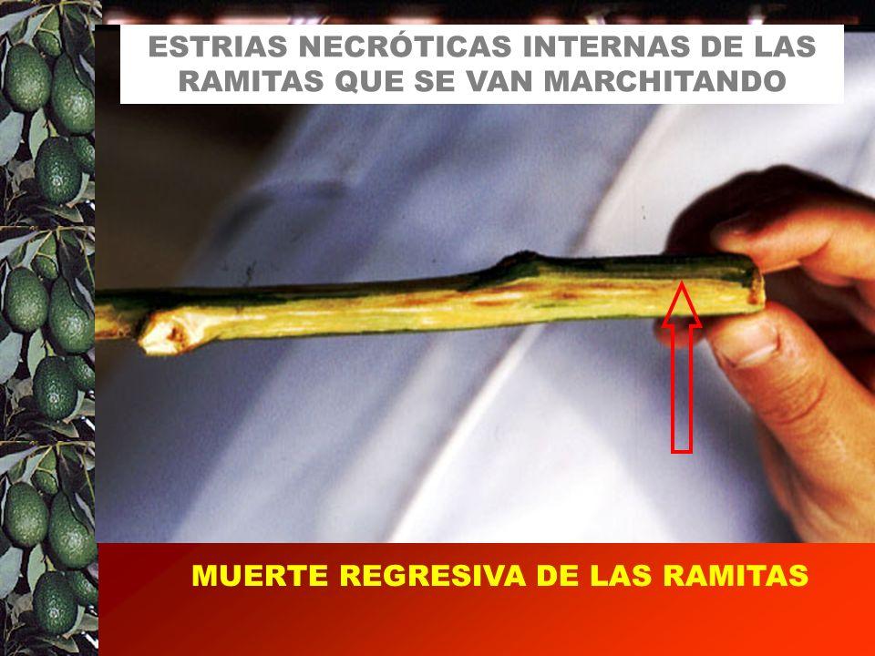 ESTRIAS NECRÓTICAS INTERNAS DE LAS RAMITAS QUE SE VAN MARCHITANDO