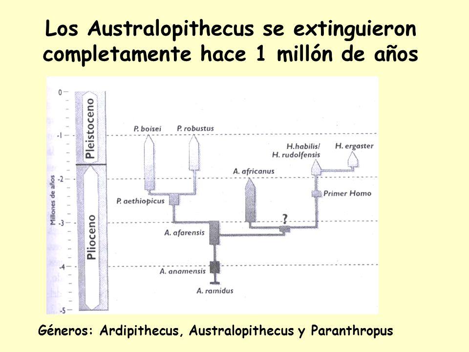 Los Australopithecus se extinguieron completamente hace 1 millón de años
