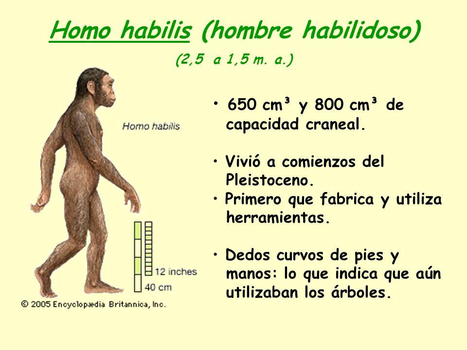 Homo habilis (hombre habilidoso)