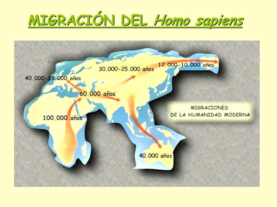 MIGRACIÓN DEL Homo sapiens