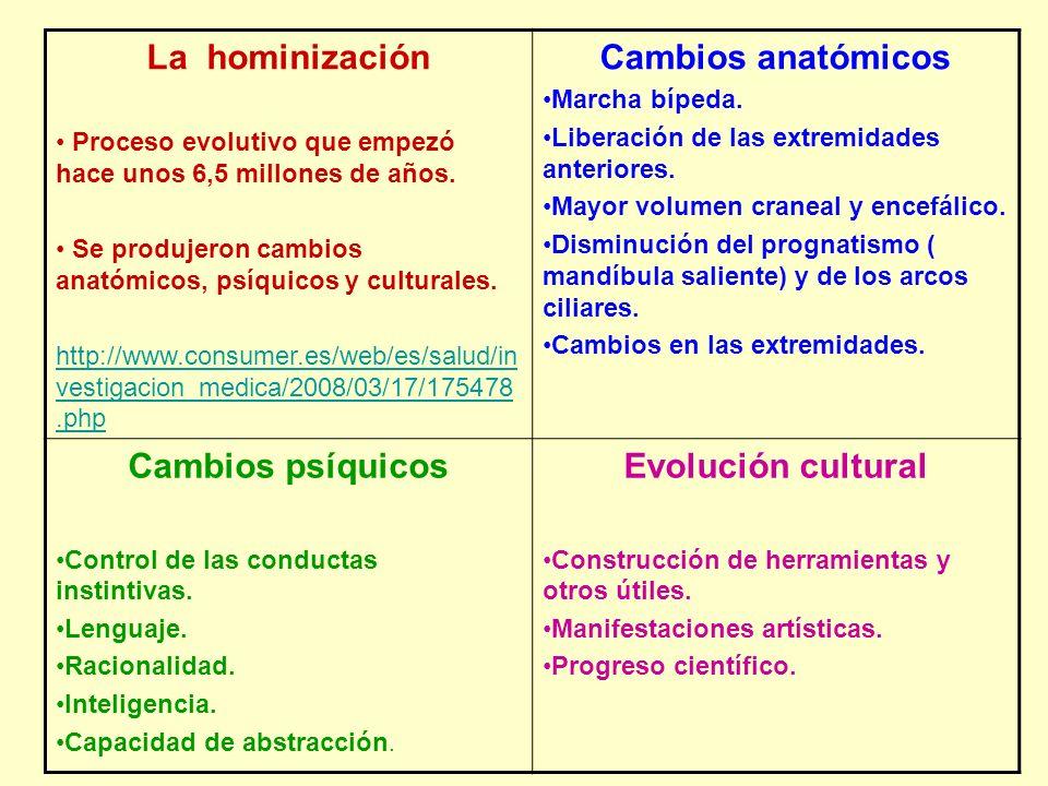 La hominización Cambios psíquicos Evolución cultural