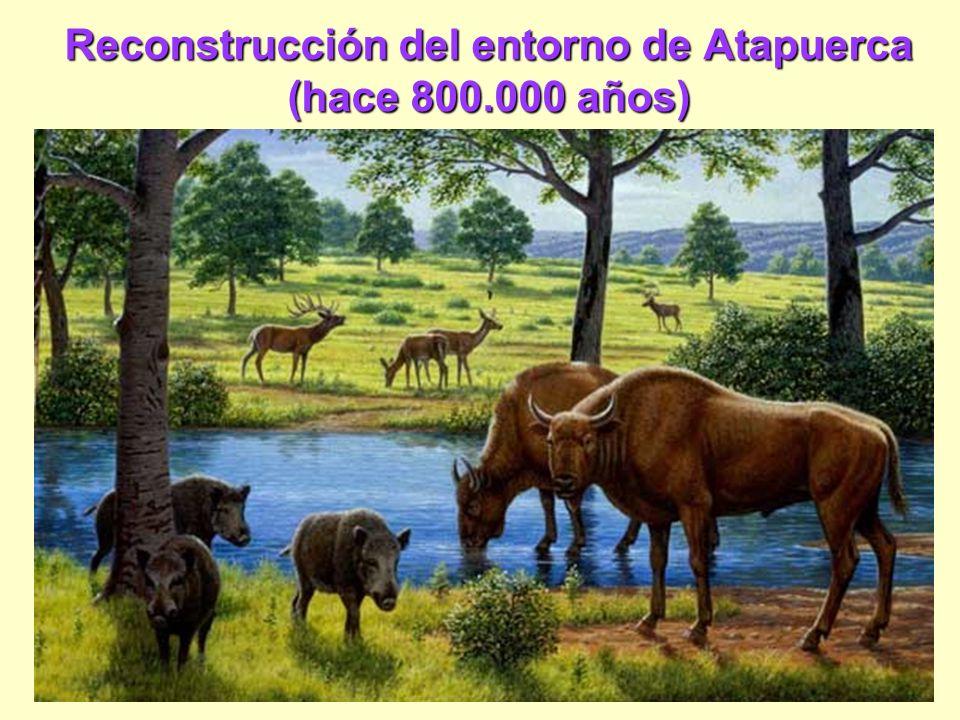 Reconstrucción del entorno de Atapuerca (hace 800.000 años)