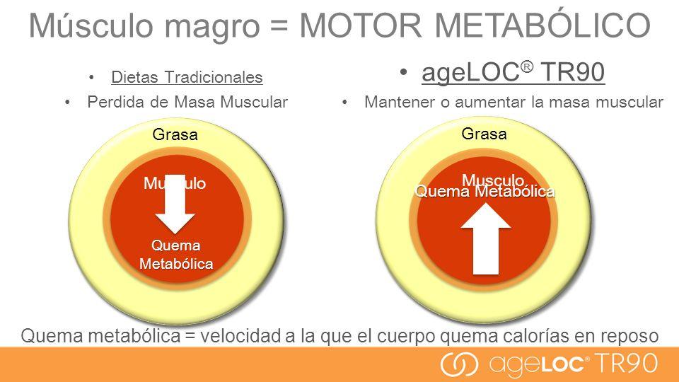 Músculo magro = MOTOR METABÓLICO