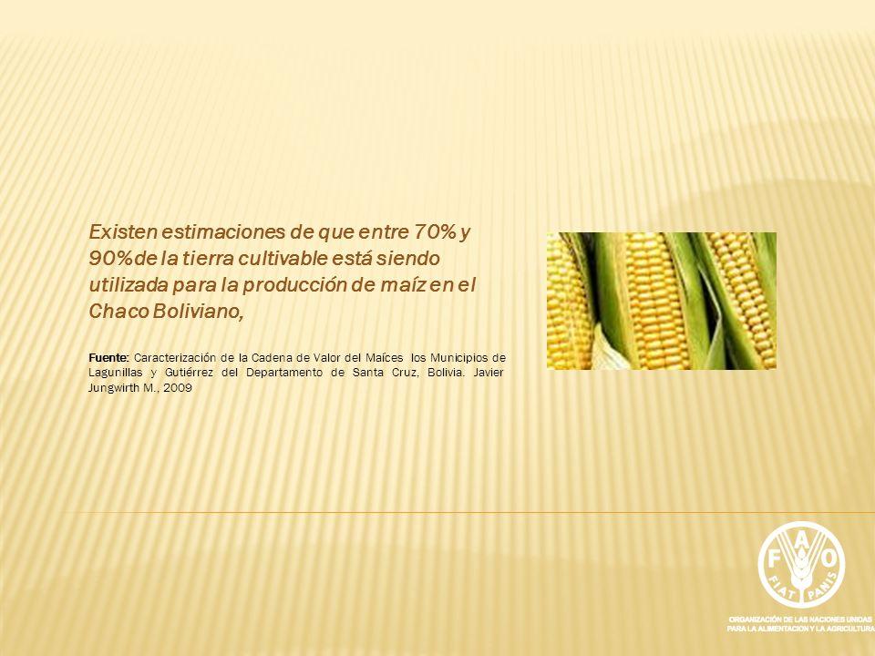 Existen estimaciones de que entre 70% y 90%de la tierra cultivable está siendo utilizada para la producción de maíz en el Chaco Boliviano,