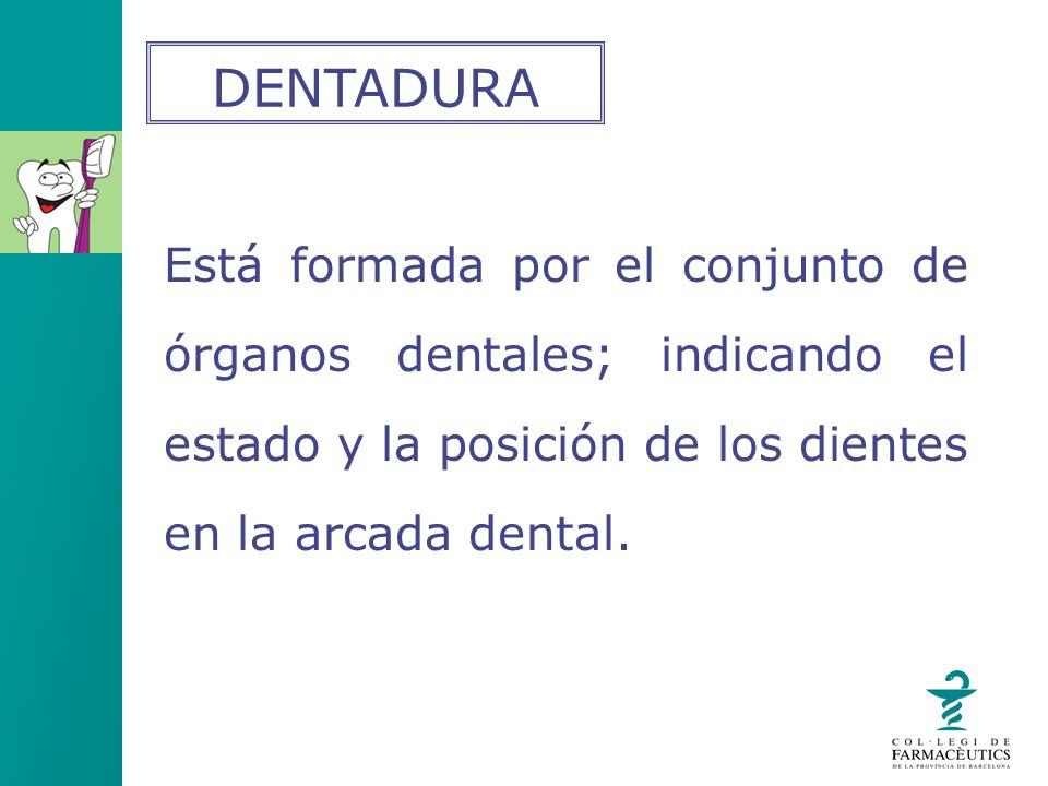 DENTADURA Está formada por el conjunto de órganos dentales; indicando el estado y la posición de los dientes en la arcada dental.