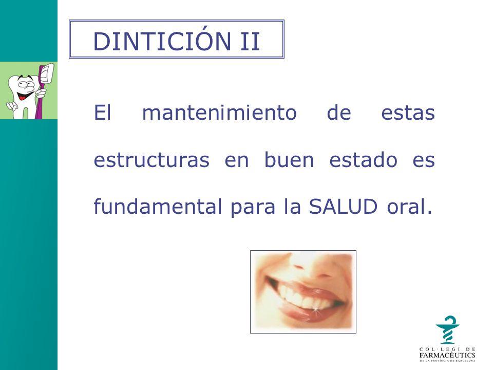 DINTICIÓN II El mantenimiento de estas estructuras en buen estado es fundamental para la SALUD oral.