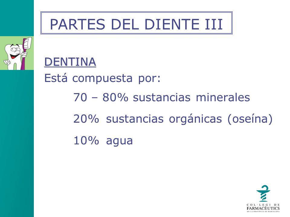 PARTES DEL DIENTE III DENTINA Está compuesta por: