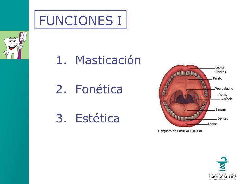 FUNCIONES I 1. Masticación 2. Fonética 3. Estética