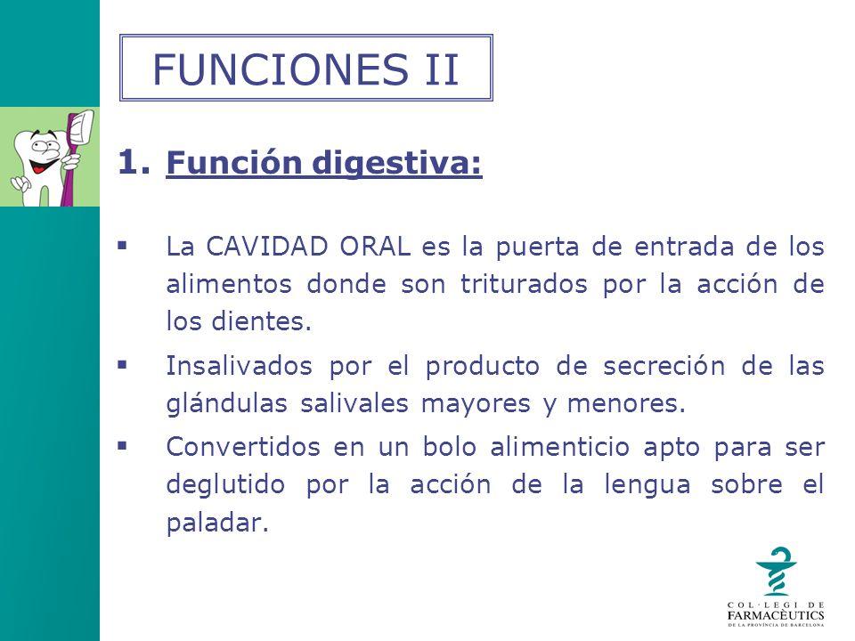 FUNCIONES II Función digestiva: