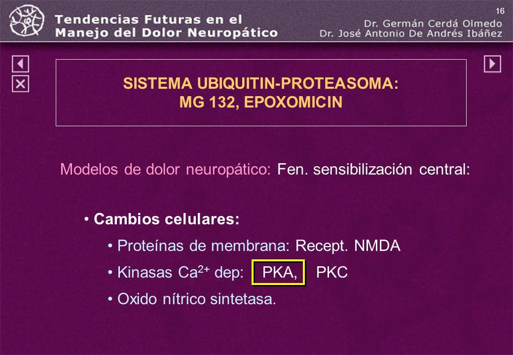 SISTEMA UBIQUITIN-PROTEASOMA: MG 132, EPOXOMICIN