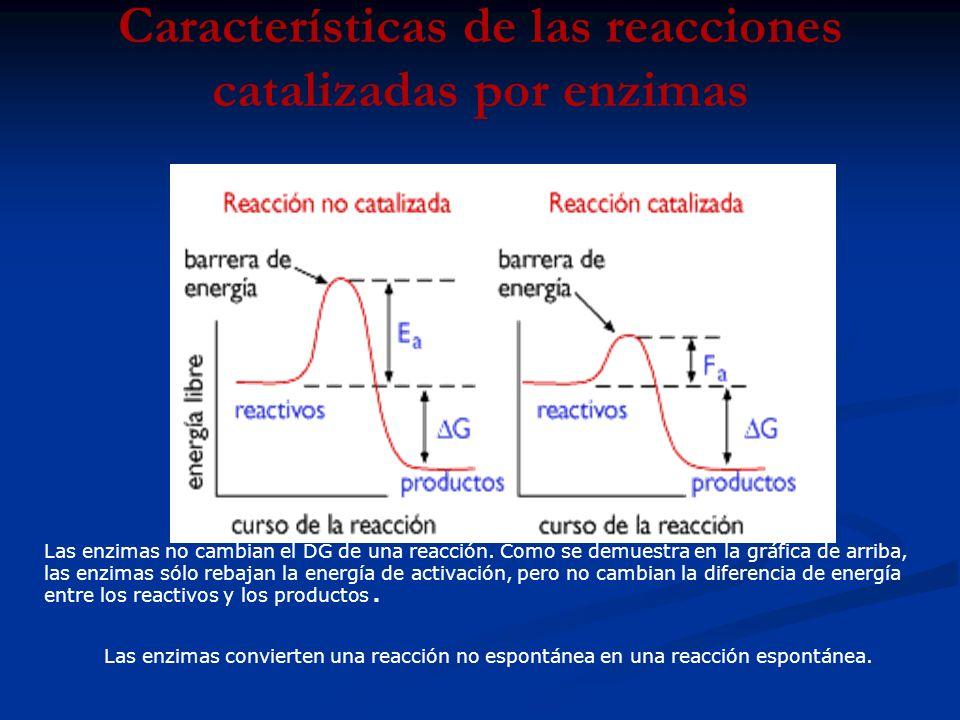 Características de las reacciones catalizadas por enzimas