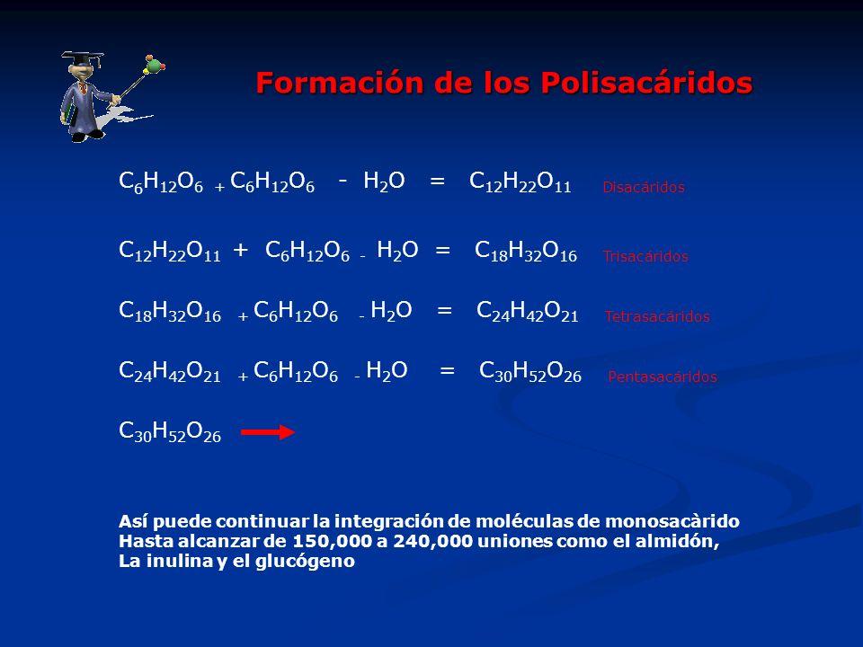 Formación de los Polisacáridos