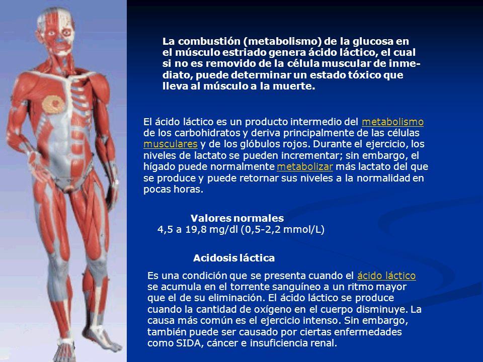 La combustión (metabolismo) de la glucosa en