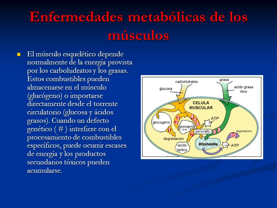 Enfermedades metabólicas de los músculos