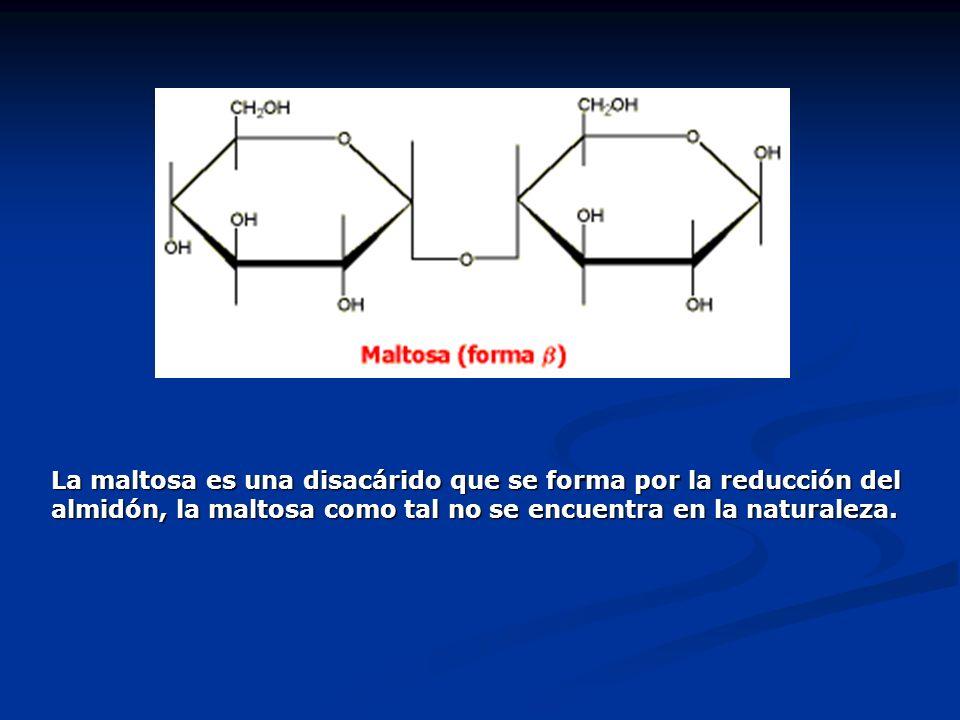 La maltosa es una disacárido que se forma por la reducción del almidón, la maltosa como tal no se encuentra en la naturaleza.