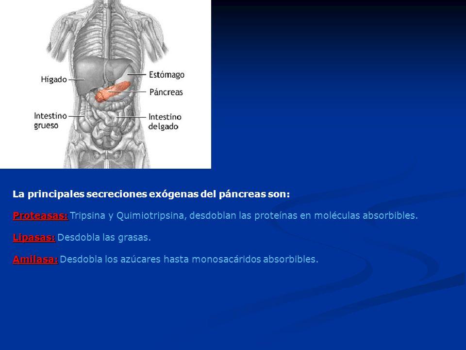La principales secreciones exógenas del páncreas son: