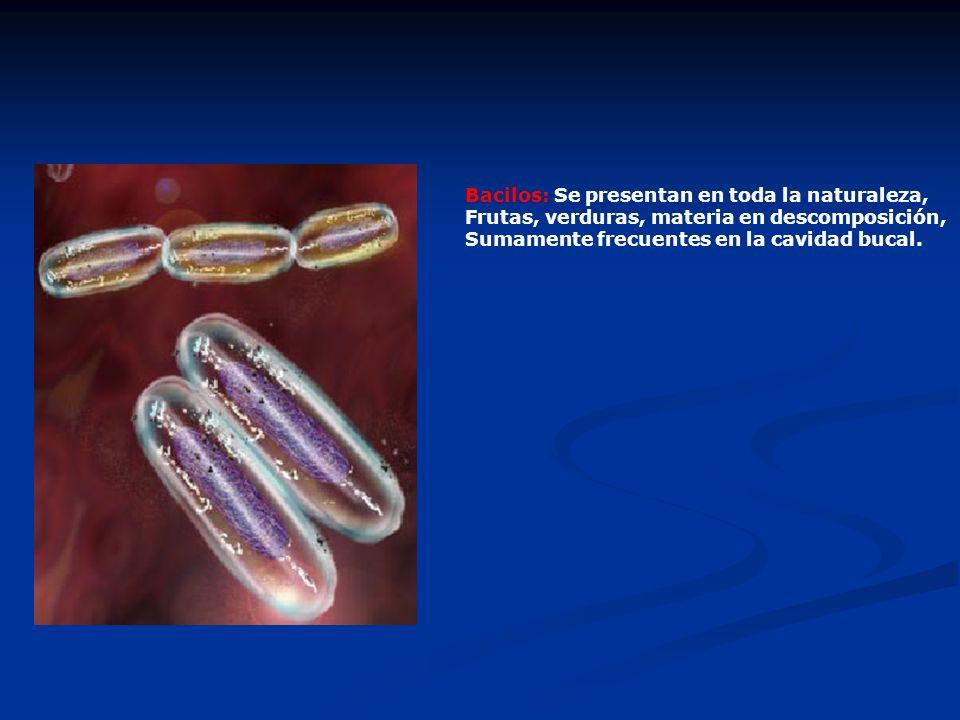 Bacilos: Se presentan en toda la naturaleza,