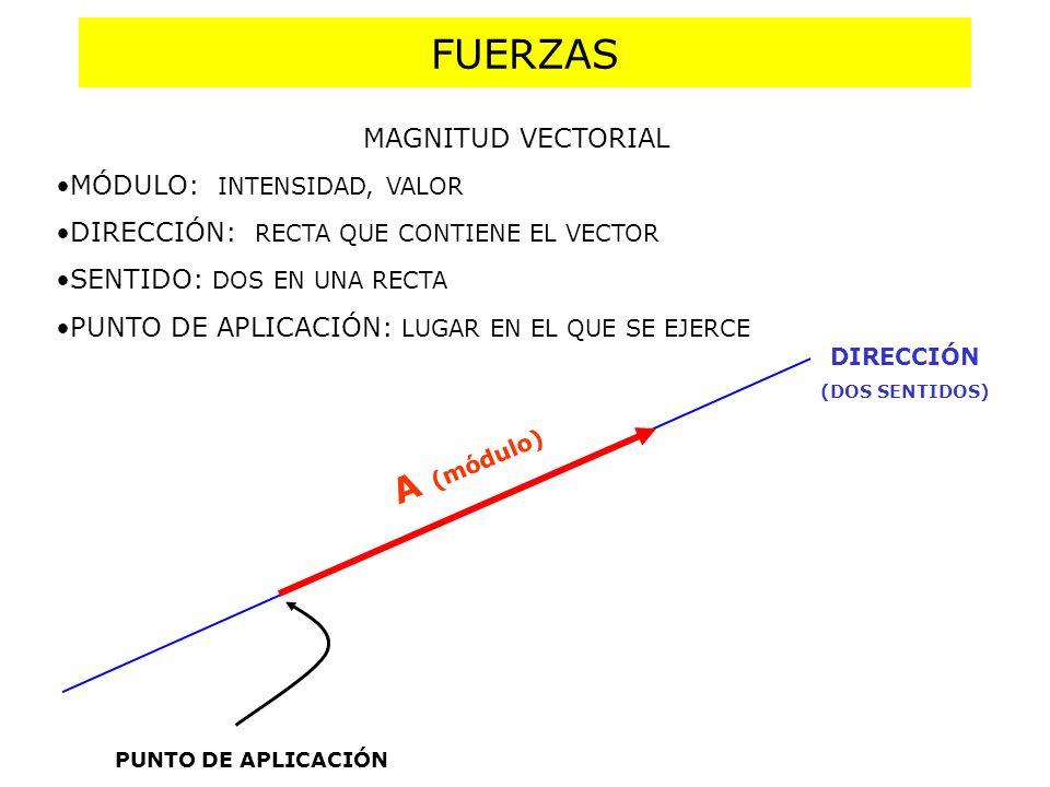 FUERZAS A (módulo) MAGNITUD VECTORIAL MÓDULO: INTENSIDAD, VALOR