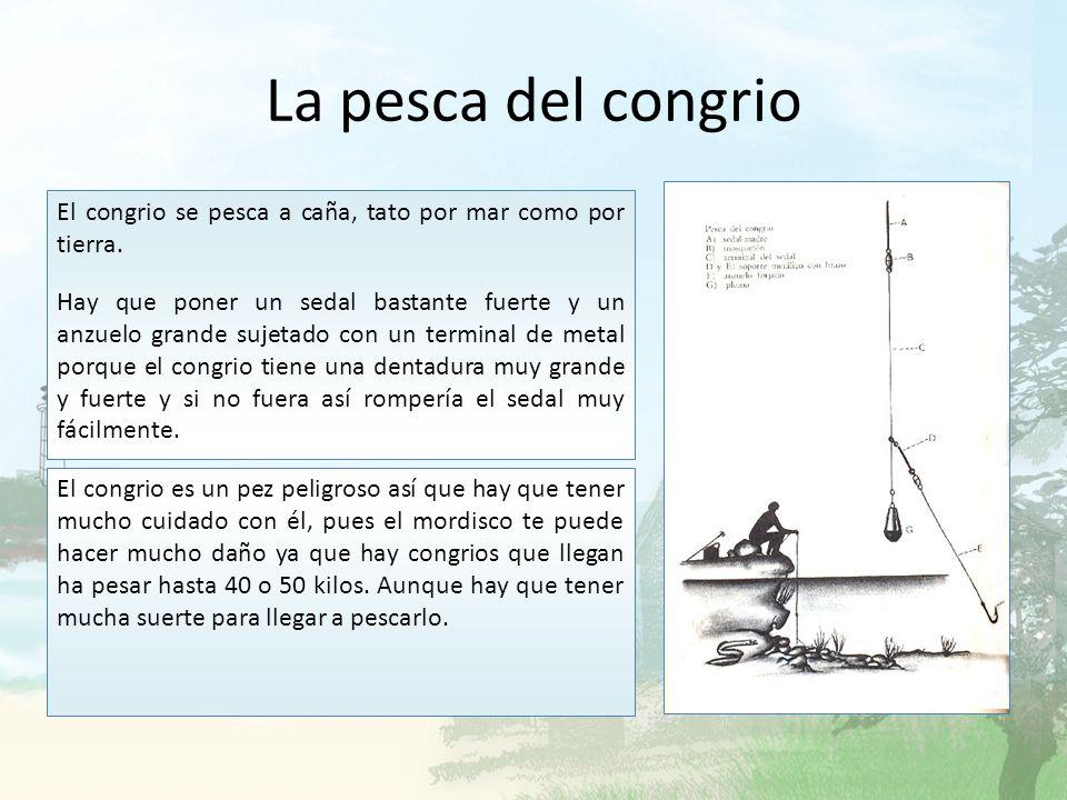 La pesca del congrio