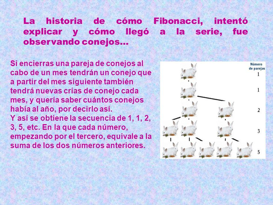 La historia de cómo Fibonacci, intentó explicar y cómo llegó a la serie, fue observando conejos…