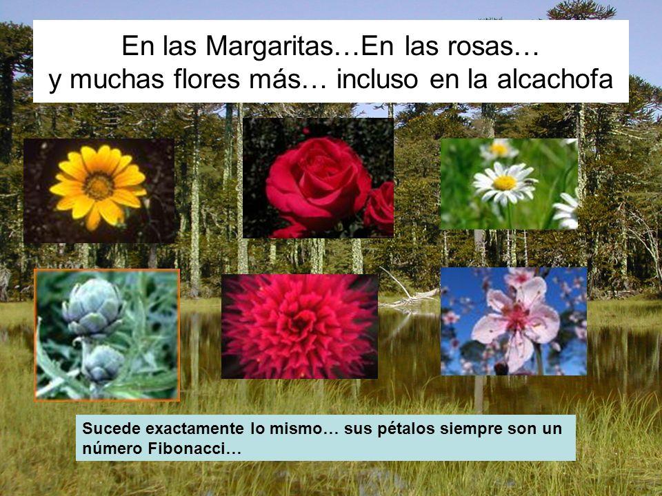 En las Margaritas…En las rosas… y muchas flores más… incluso en la alcachofa