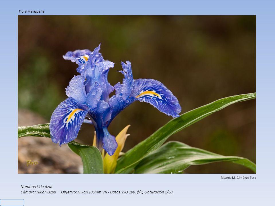 Flora Malagueña Ricardo M. Giménez Toro. Nombre: Lirio Azul.