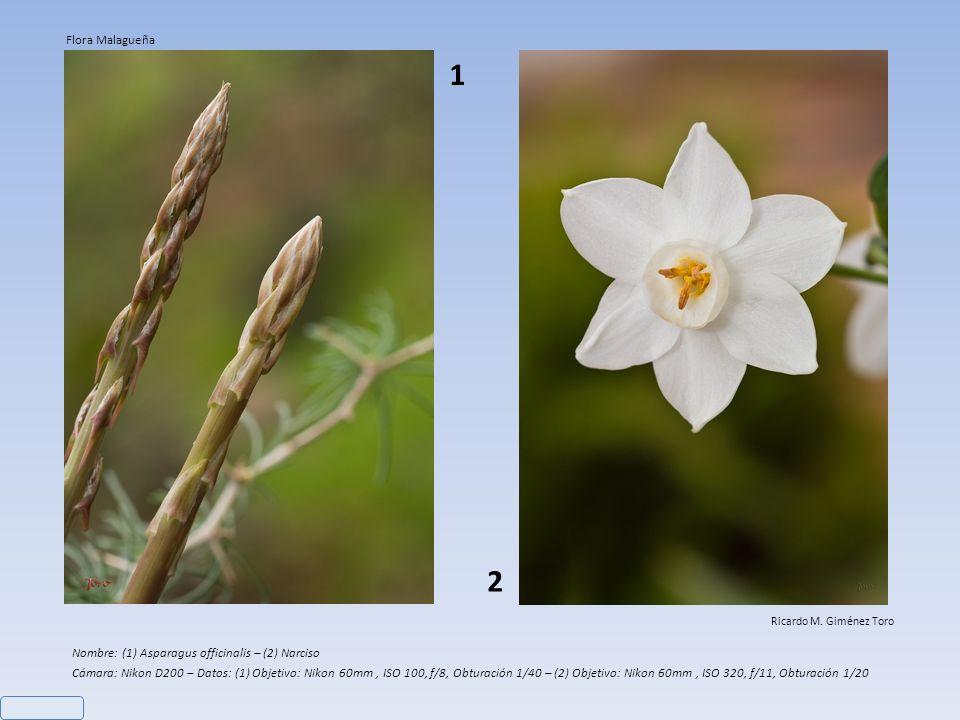 1 2 Flora Malagueña Nombre: (1) Asparagus officinalis – (2) Narciso