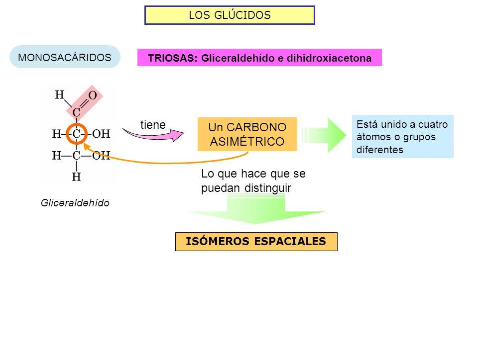 TRIOSAS: Gliceraldehído e dihidroxiacetona
