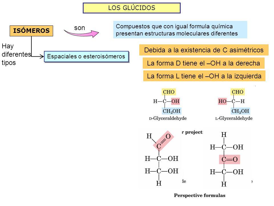 Debida a la existencia de C asimétricos
