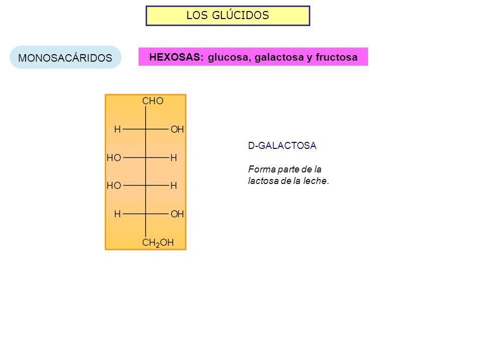 HEXOSAS: glucosa, galactosa y fructosa