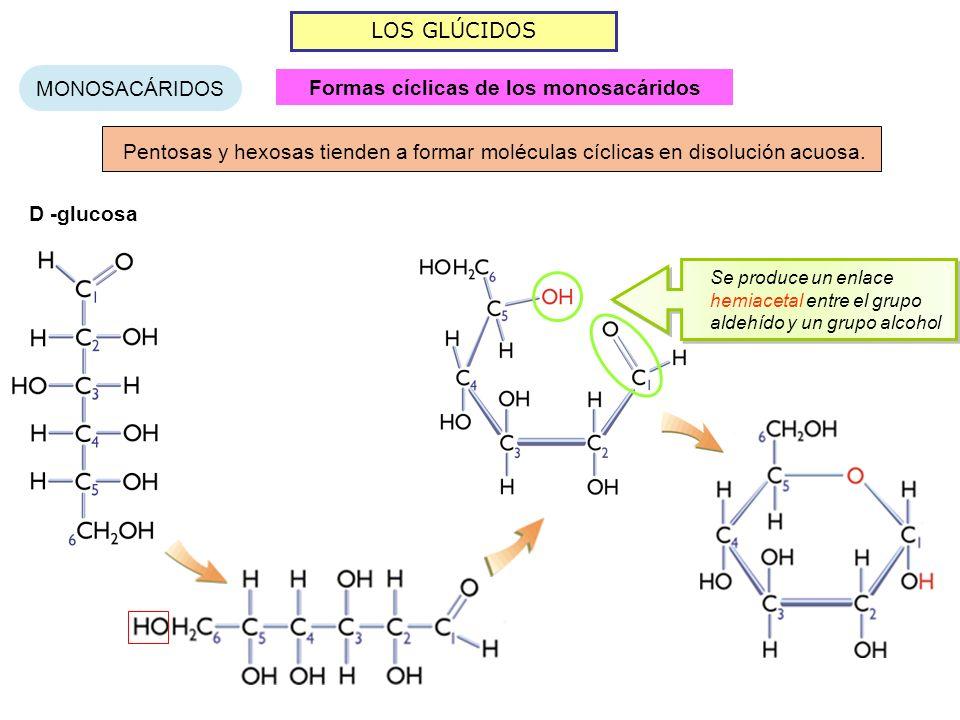 Formas cíclicas de los monosacáridos