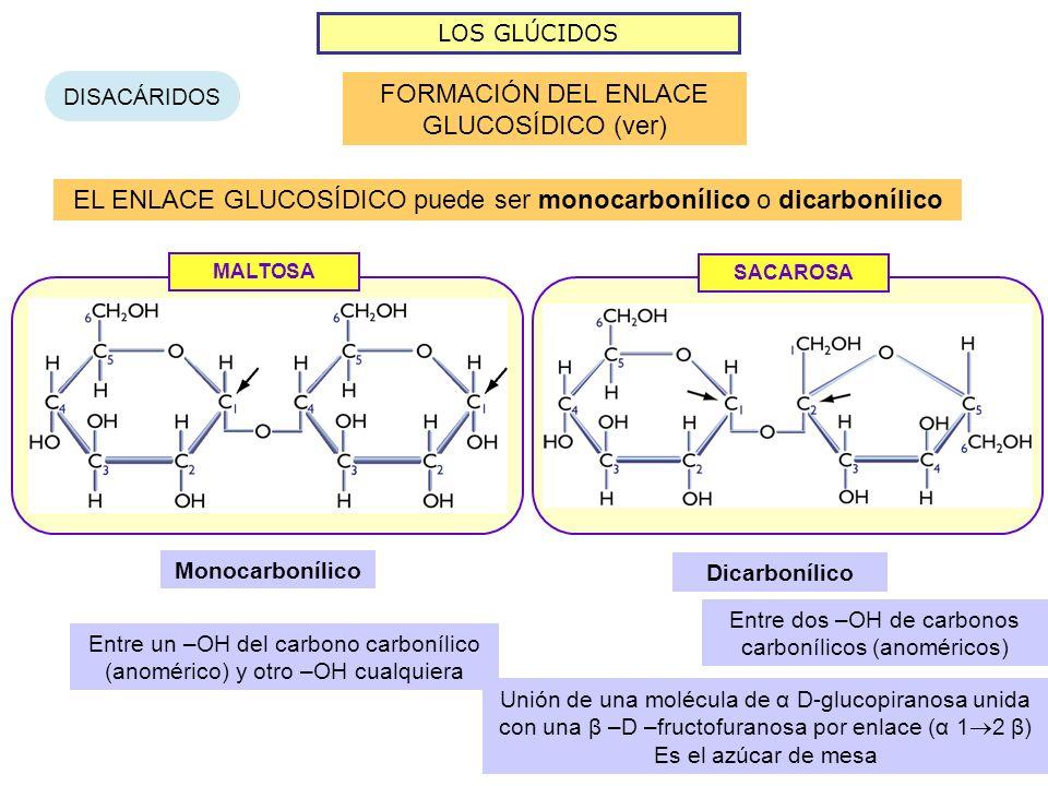 FORMACIÓN DEL ENLACE GLUCOSÍDICO (ver)