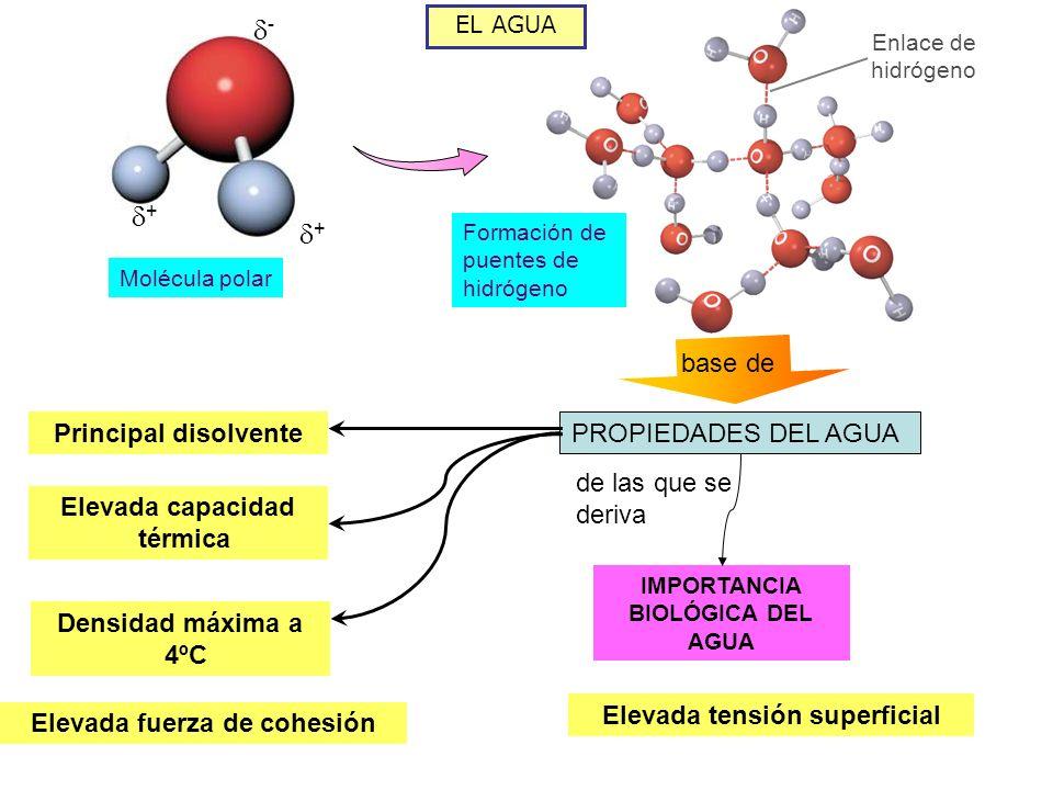- + + base de Principal disolvente PROPIEDADES DEL AGUA