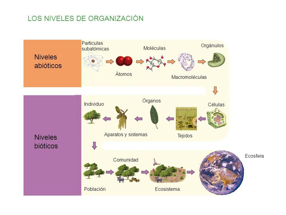 LOS NIVELES DE ORGANIZACIÓN