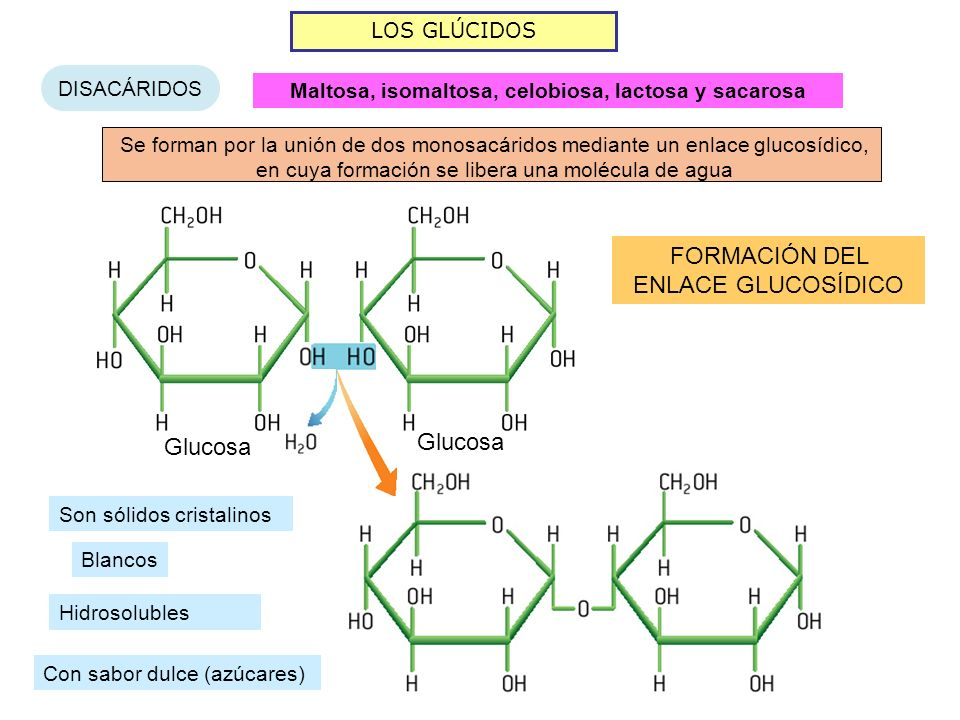 Maltosa, isomaltosa, celobiosa, lactosa y sacarosa