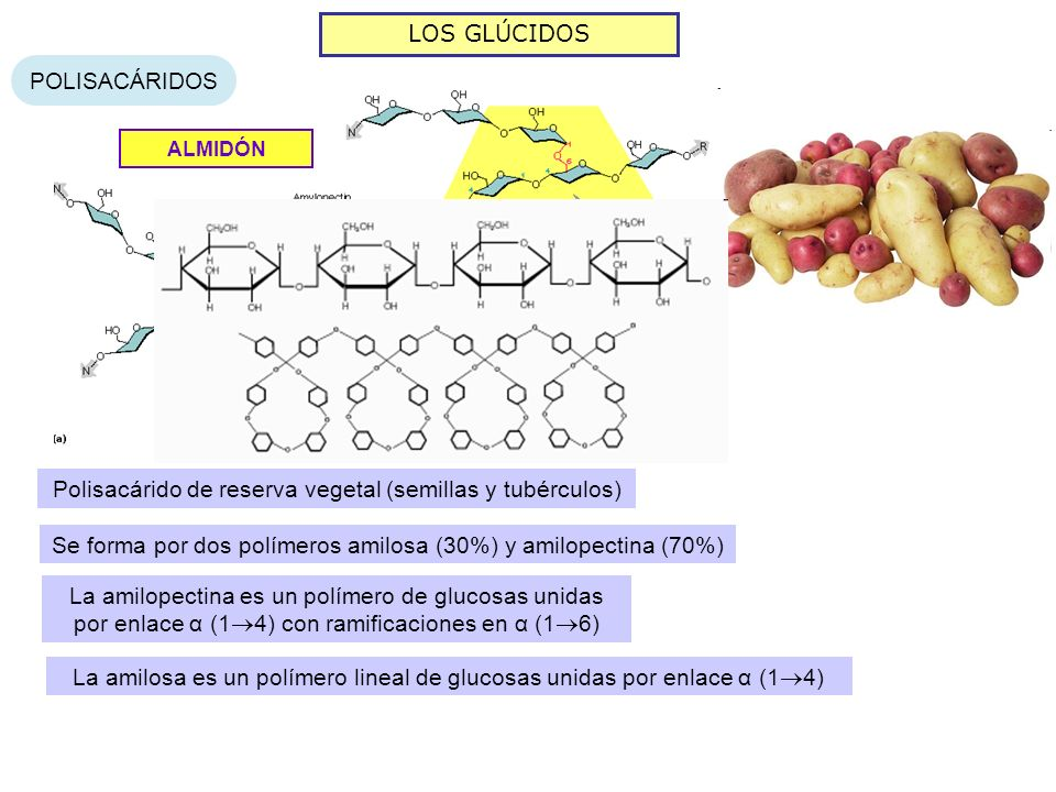 Polisacárido de reserva vegetal (semillas y tubérculos)