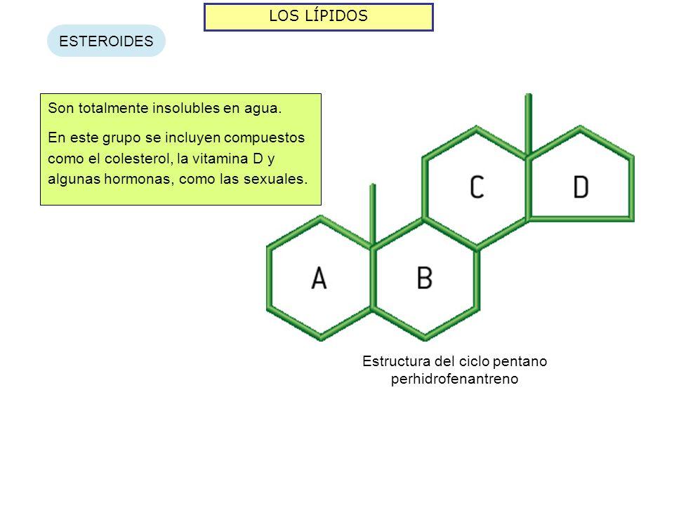 Estructura del ciclo pentano perhidrofenantreno